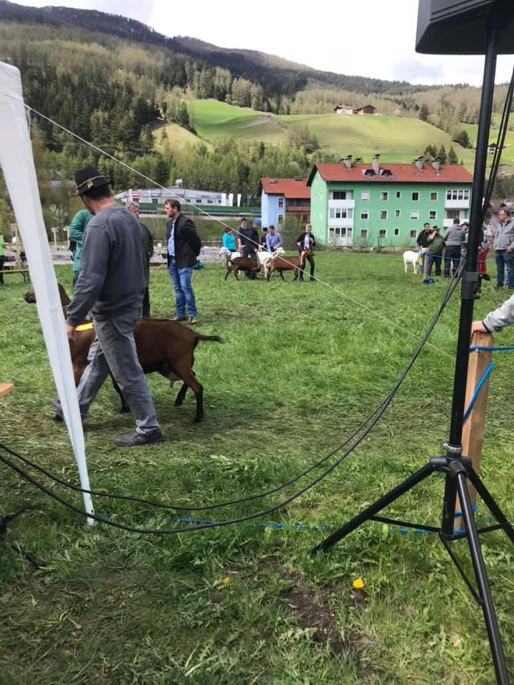 Verkehrsdienst – Ziegenausstellung Mühlen