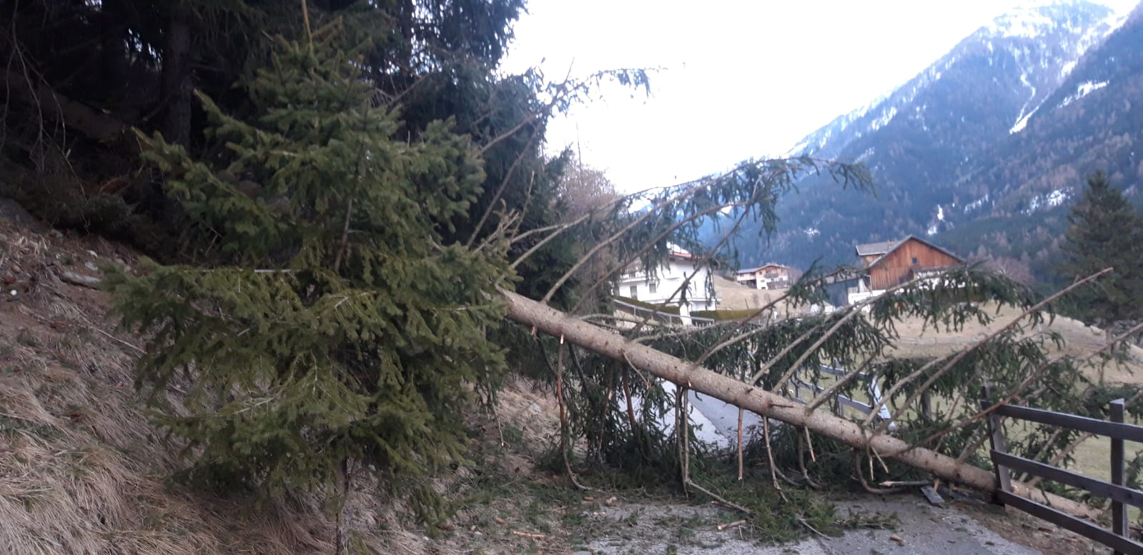 THL Eigenanforderung – Baum auf Strasse